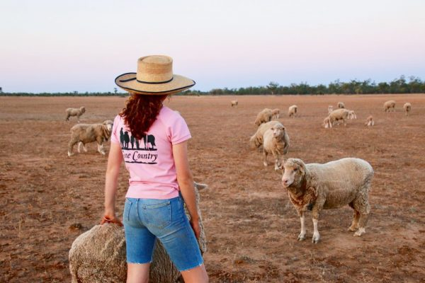 Ladies gone country t-shirt with sheep 3