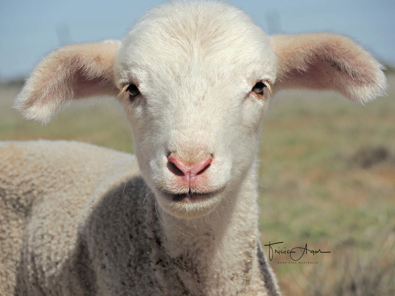 Lamb The Bush Store